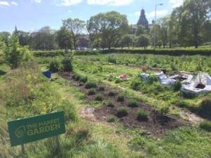 community-garden-300x225.jpeg