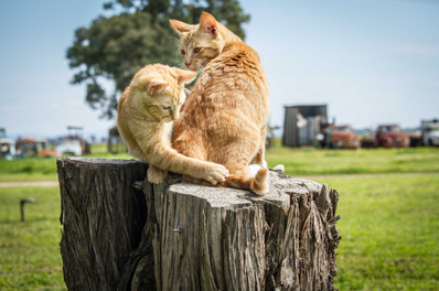 web_the kittens -5.jpg