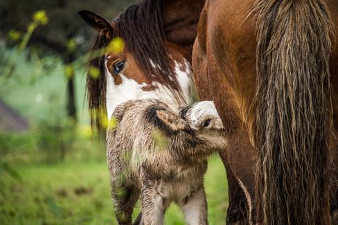 Quirindi animals-5.jpg