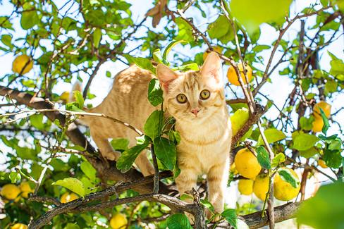new - lemon tree kittens-2.jpg