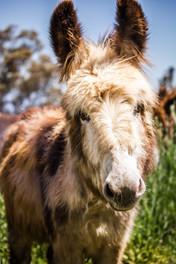web_donkey_horse_visit_october-16.jpg
