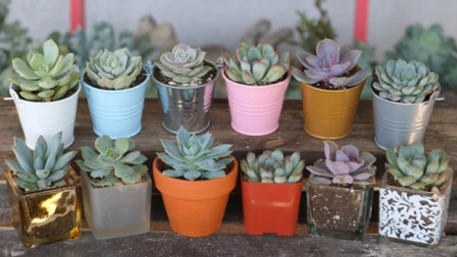 Fall Succulents Fundraiser