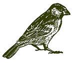 sparrow%201_edited.jpg