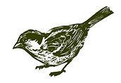 sparrow%202_edited.jpg