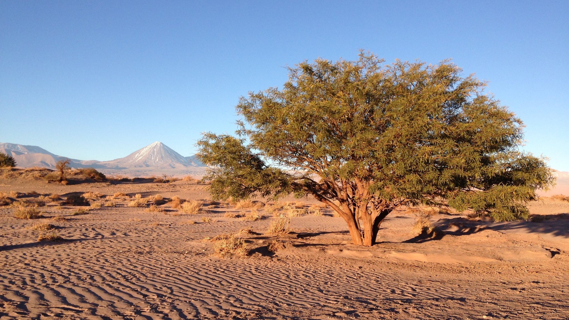 nytimes-desert-01.jpg