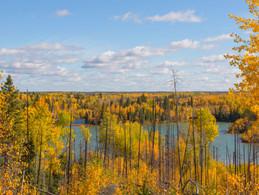 Fall_Colours_of_Canada_Boreal_edited.jpg