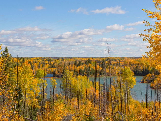 Fall_Colours_of_Canada_Boreal_edited.jpg