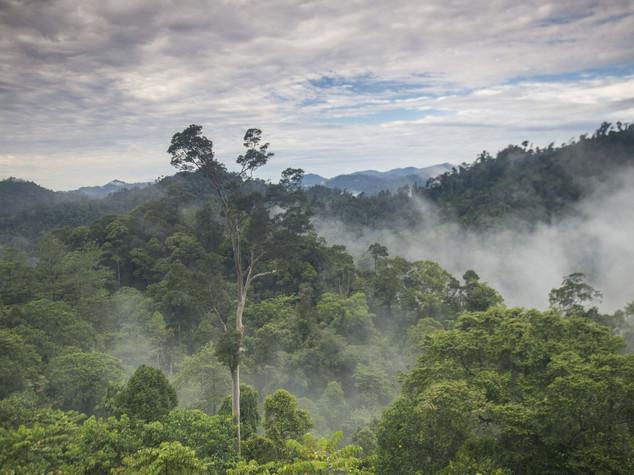 East Kalimantan Indonesia.jpg