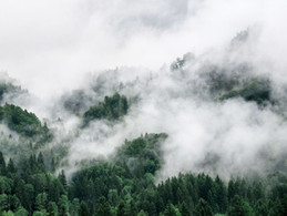 panoramic-shot-of-trees-in-forest-agains