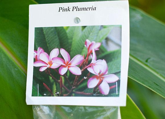 Plumeria Cutting