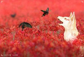 赤と白と黒の世界
