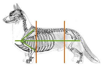 skeletkfardwwi.jpg