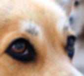 визуальный контакт с собакой