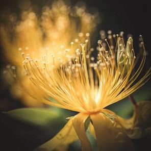 Paroles de Fleur