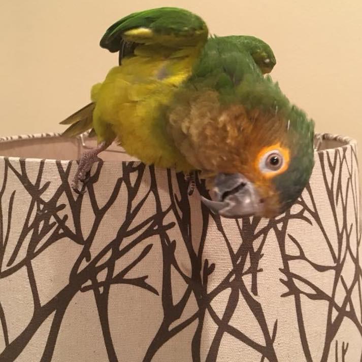 Bird with head and body cocked sideways