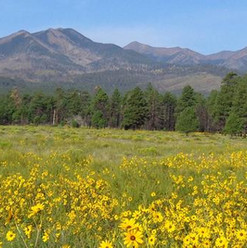 Sunset Crater Volcano National Monument_