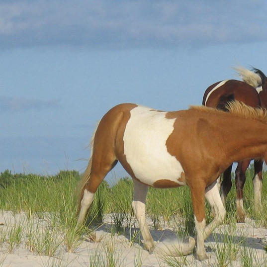 assateague_hero.jpg