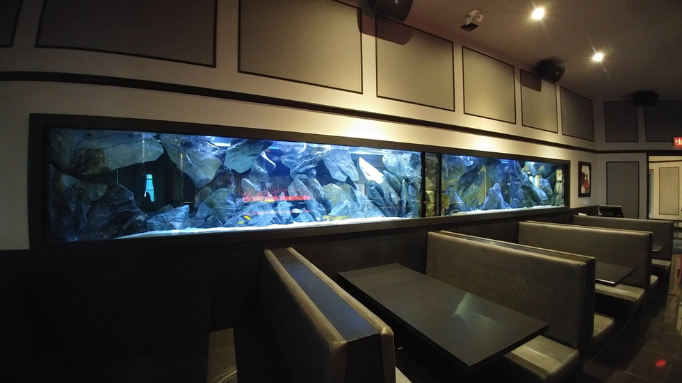 Designed & Installed by Aqua Decor. Maintained by Vision Aquariums