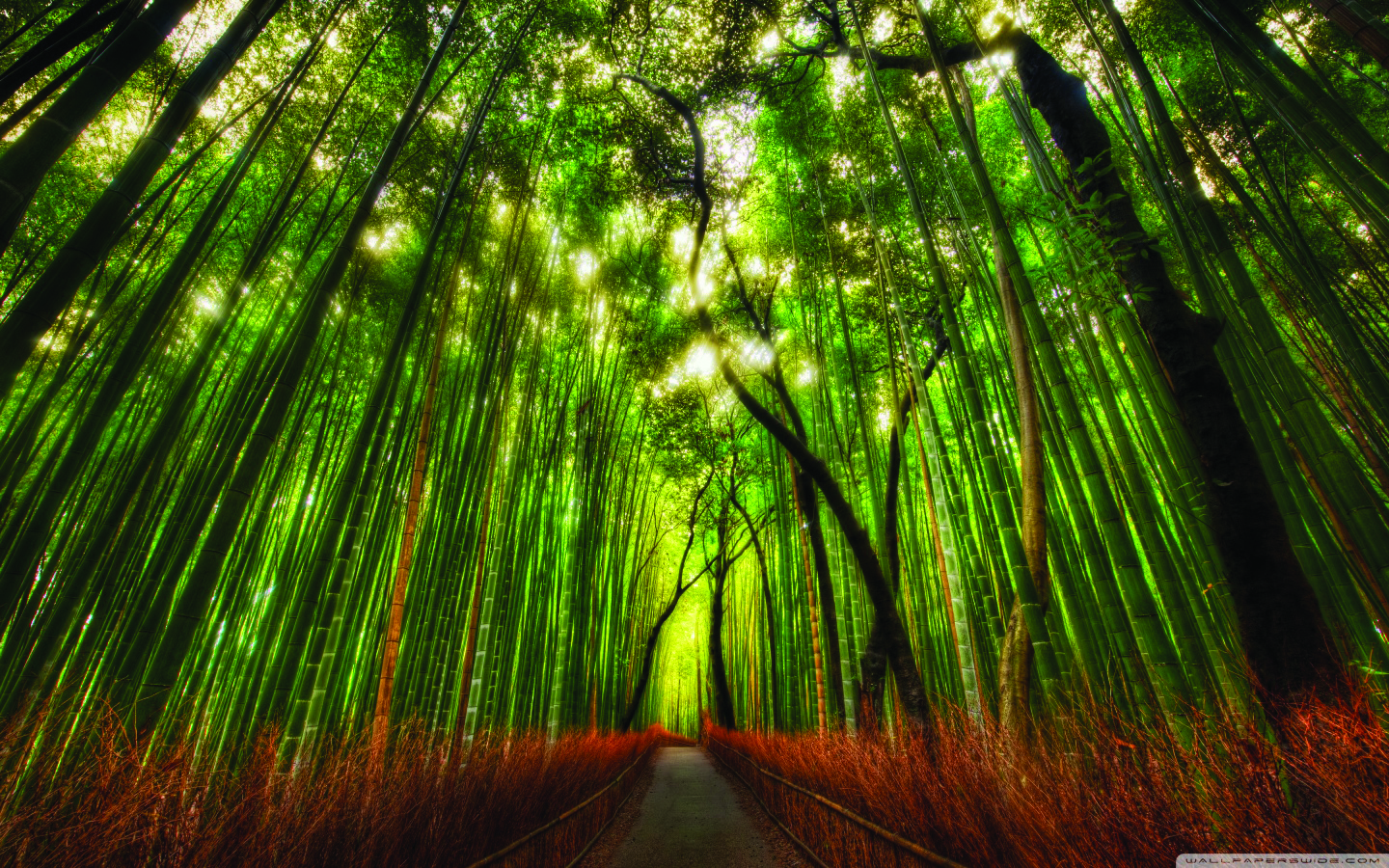 bamboo_forest-wallpaper-1440x900.jpg