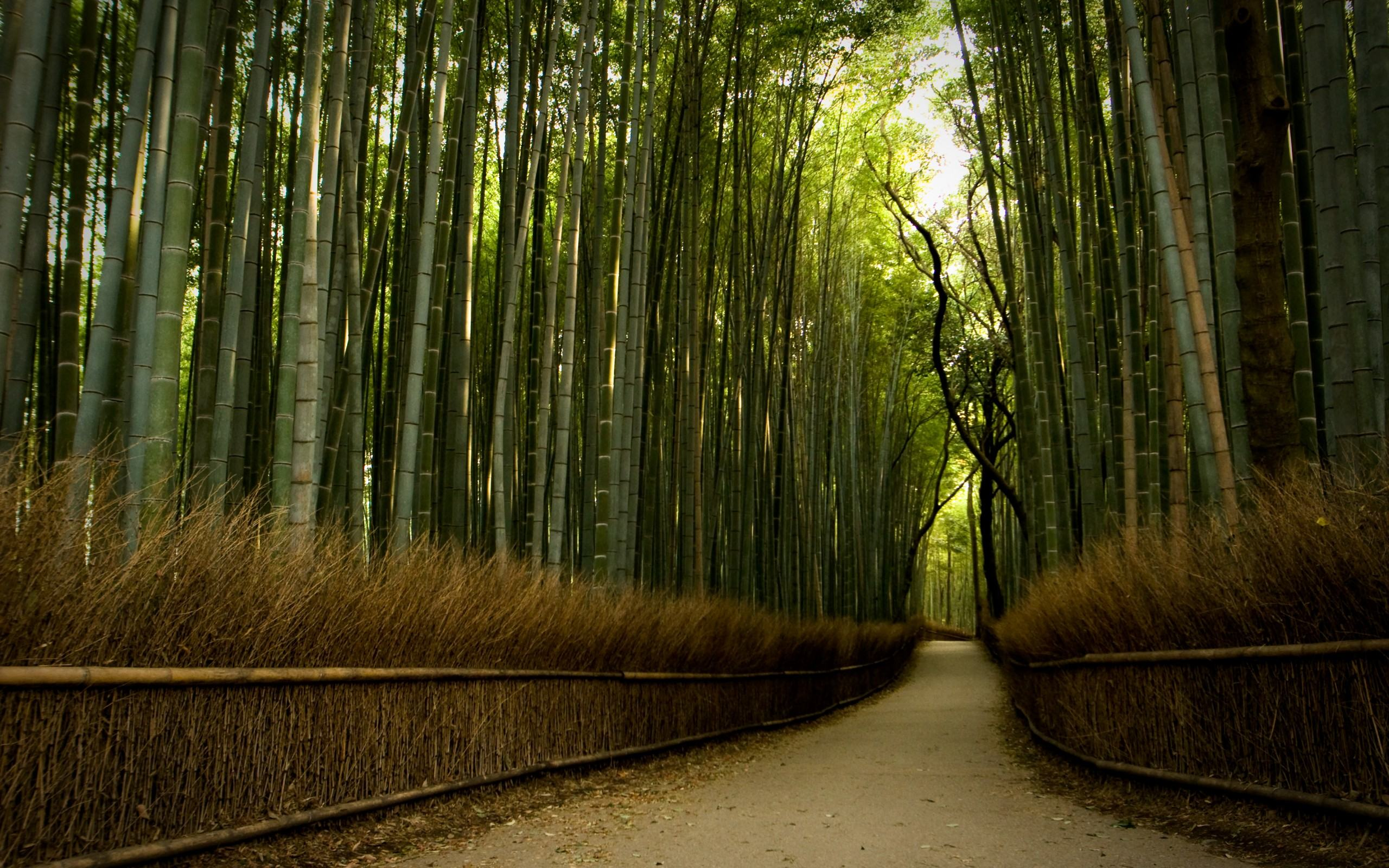 bamboo-forest-hd-645948.jpg