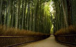 bamboo-forest-hd-645948.jpg