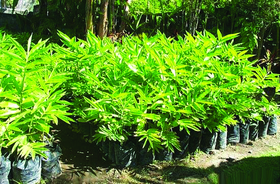 biotech_tc_forest_grow_bamboo_clip_image002_0001.jpg