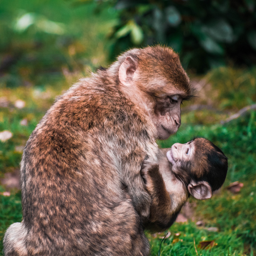 Just try to handle these cute baby animal pictures! Some are funny, all are super adorable. #funny #happiness #lol #humor #life #happy #cats #catlovers #animals #animallovers #pets #petlovers #love #dogs #doglovers #babyanimals #photography #beautiful #photooftheday #photos #art #artwork #artist #creative #creativity #picoftheday #pic #pictureoftheday #picture #photo #collage #outdoor #cute #cuteanimals #cutecats #adorable #elephant #chicken