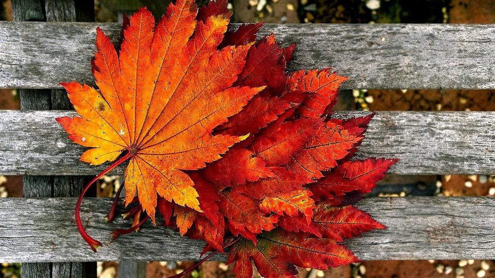 fall pic 2.jpg