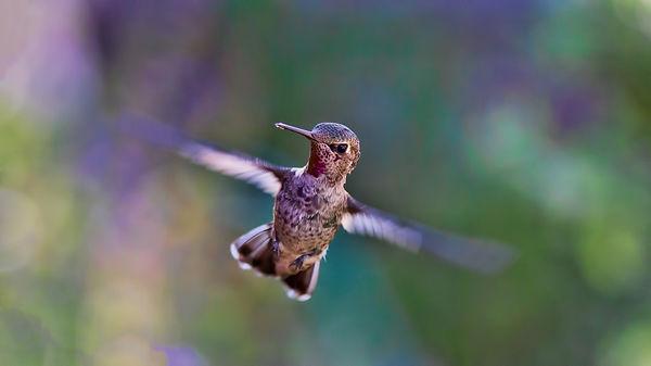 hummingbird-691483_1920.jpg