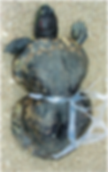 turtle-05.png