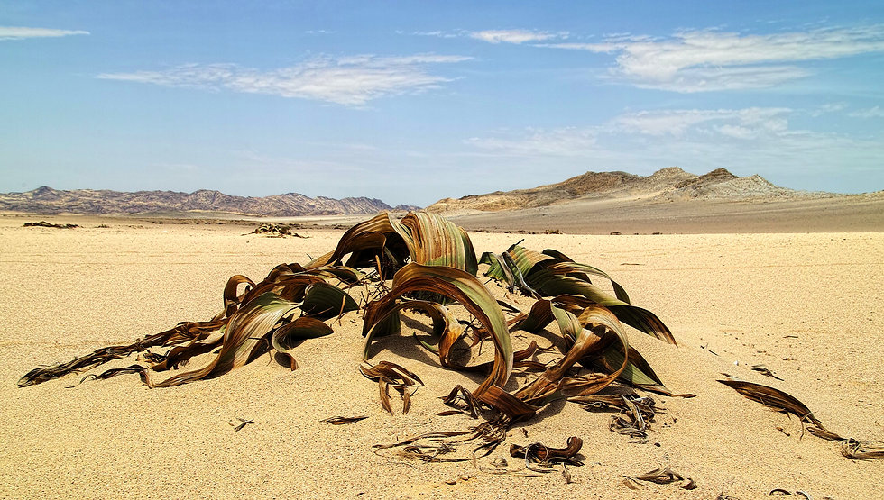 Moon Landscape and welwitschia tour