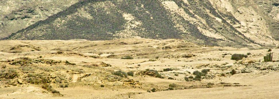 Zebras at near the Welwitschia plains