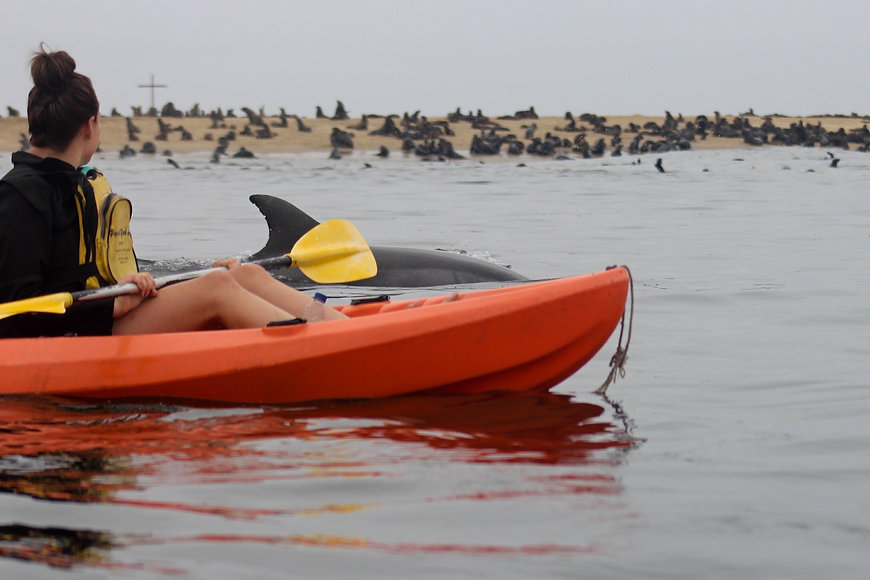 Kayak and Sandwich Harbour Tour, cape fur seals,marine kayaking with wild seals and dolphins, surf and turf 4x4 tour.