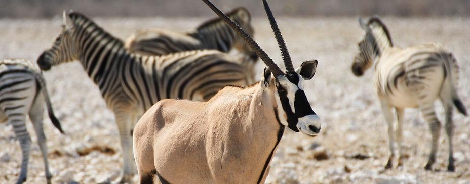 Etosha Safari, oryx, zebra, Etosha National Park, antelope, private wildlife photography safari