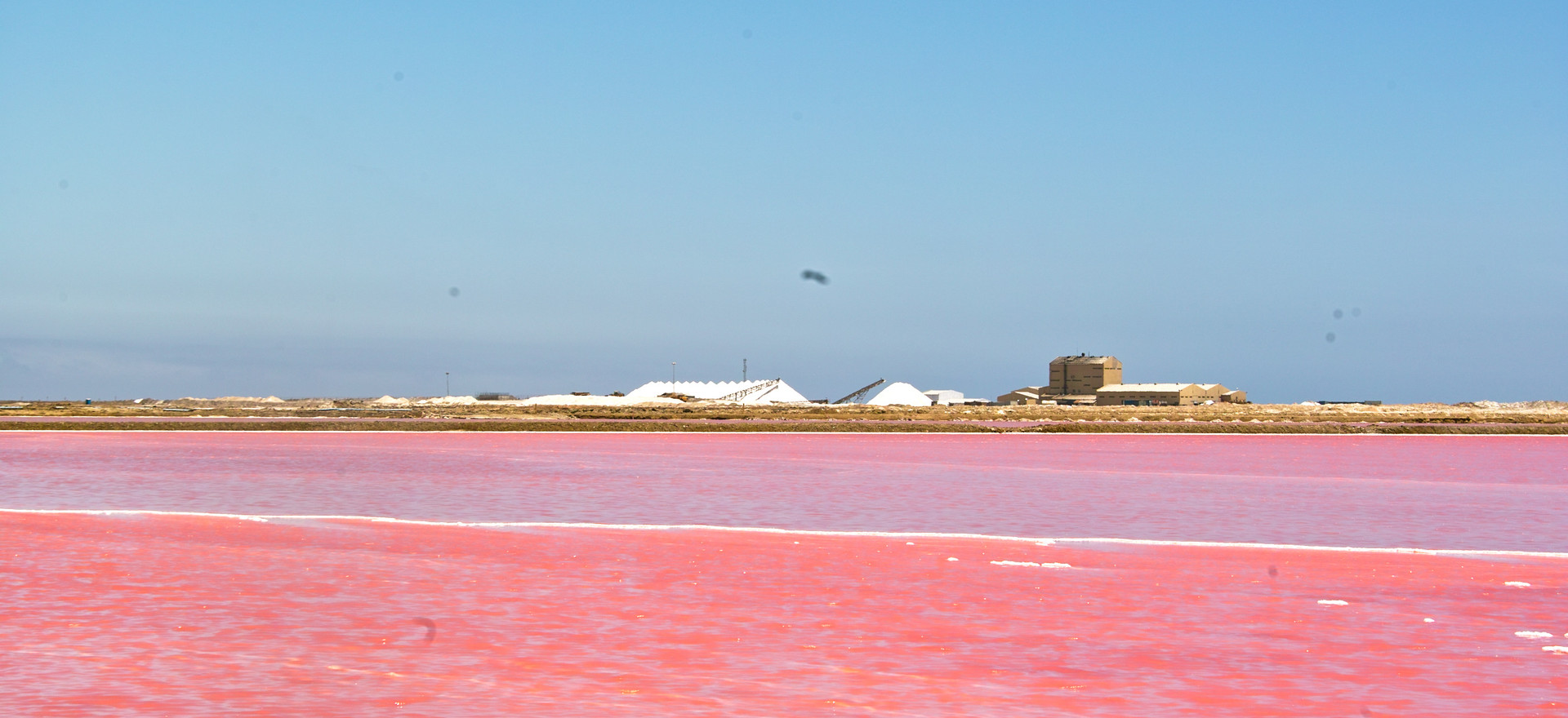 Pink salt lakes near Walvis Bay