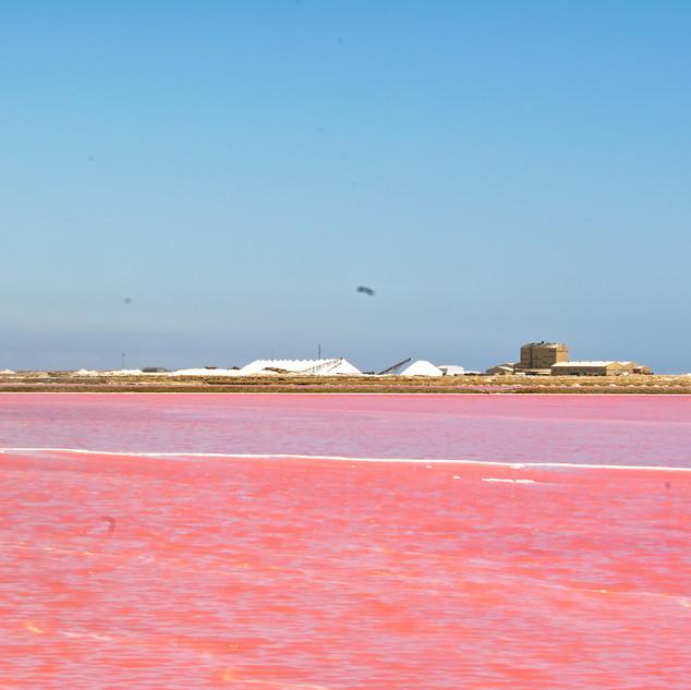 Pink salt lakes near Walvis Bay
