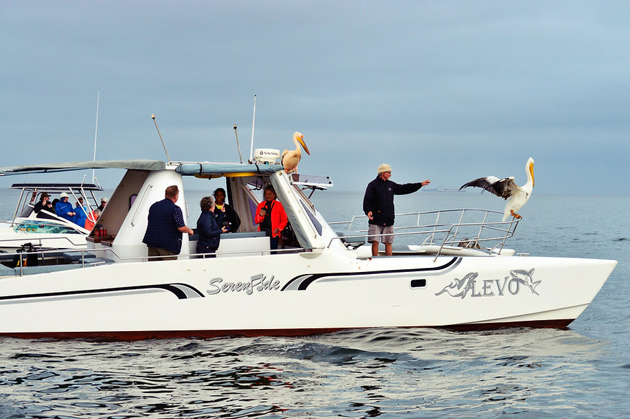 Pelican, dolphins, seals, boat cruise and dunes combination tour, sand and sea.
