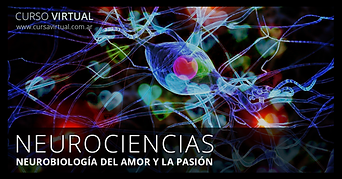 neurociencias.png