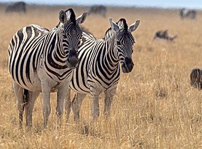 namibia-4922259 (1).jpg