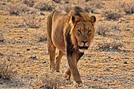 namibia-5183596.jpg