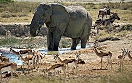 namibia-4928984.jpg