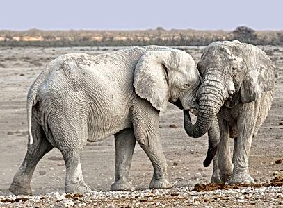 elephant-1170108.jpg