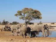 elephants-495693.jpg