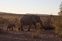 elephant-4785150.jpg