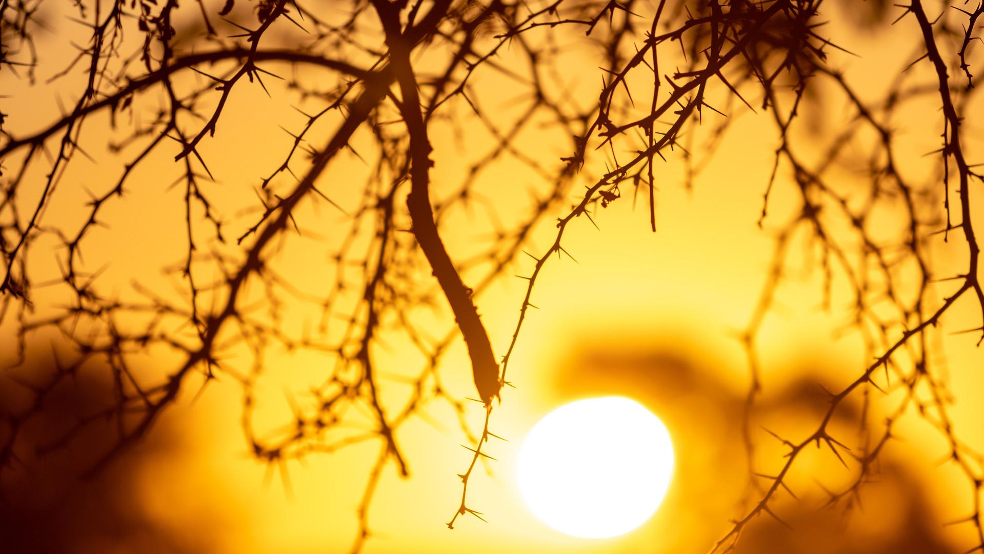 sunset-4993832.jpg