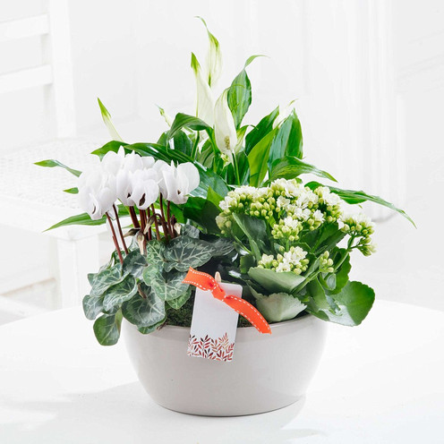 White Spathiphyllum, White Kalandiva and White Cyclamen in a Warm Grey Ceramic Bowl