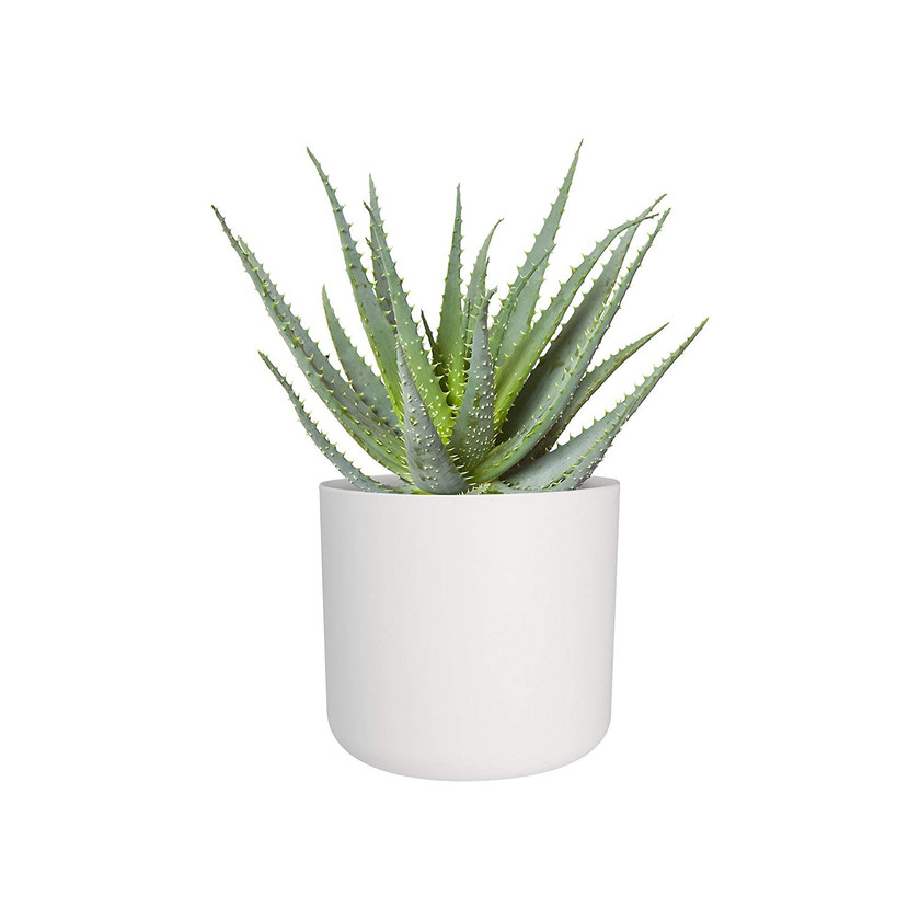 White flower pot. Indoor decorative plant pots. Indoor plants