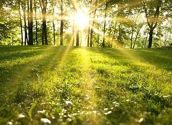 sunlight (1).jpg
