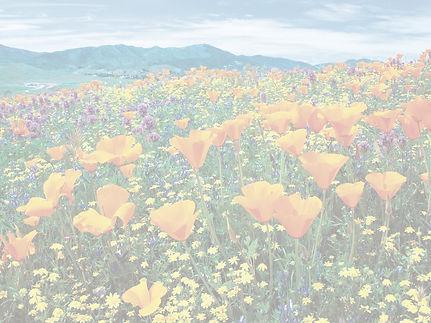 poppies_edited_edited.jpg