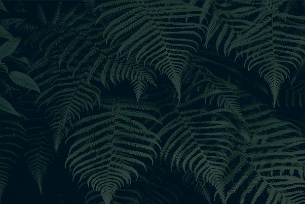 Tropical%20Plant_edited.jpg